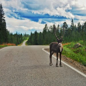 How to plan a successful road trip in Finland - Gofinland blog