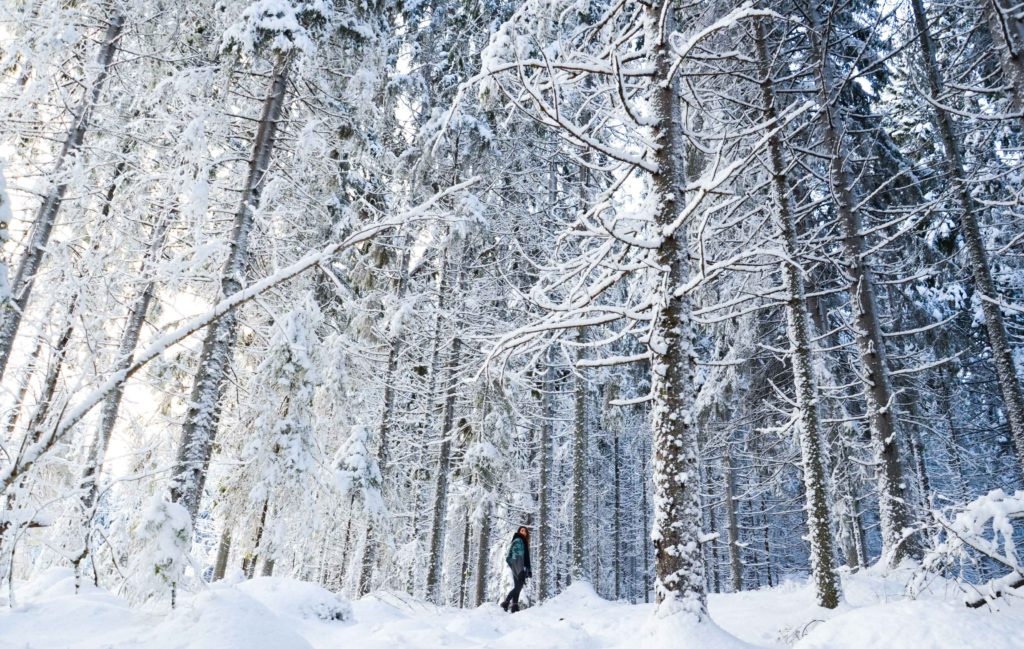 Walking among the trees in Finnish nature