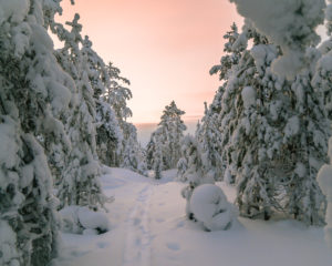 Rovaniemi Winter Landscape