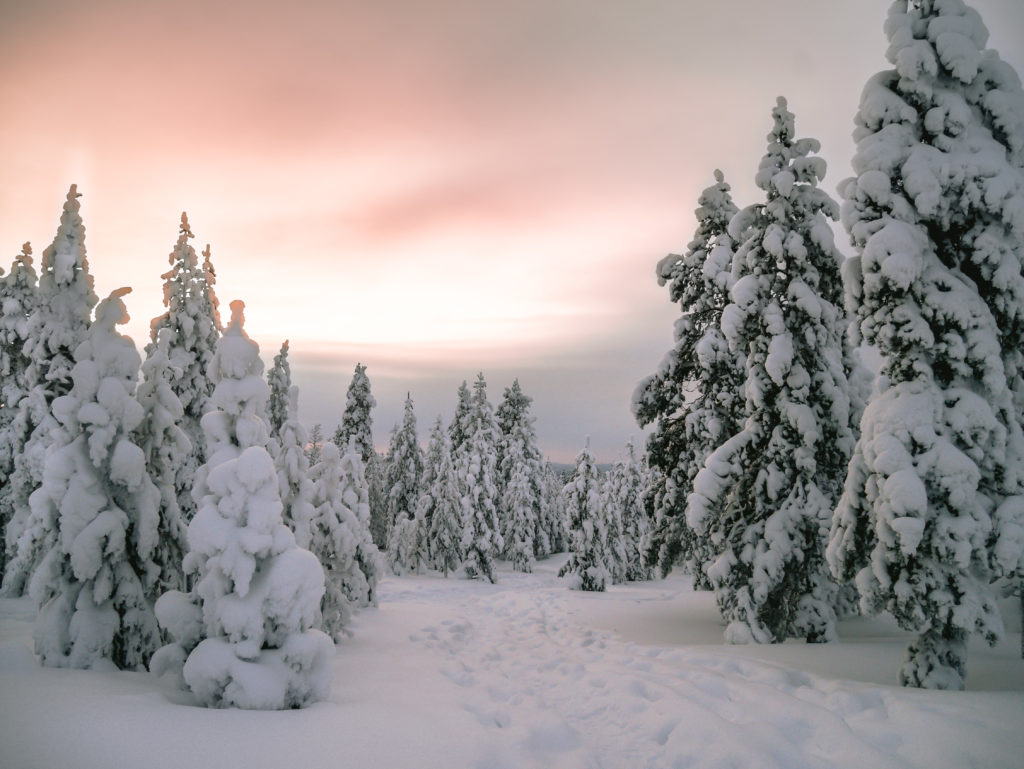 Lapland snow nature